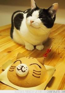 gatoCumple